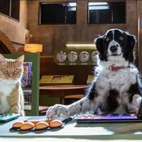 Como perros y gatos 3: la patrulla unida