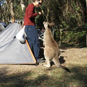Australia eta bere fauna
