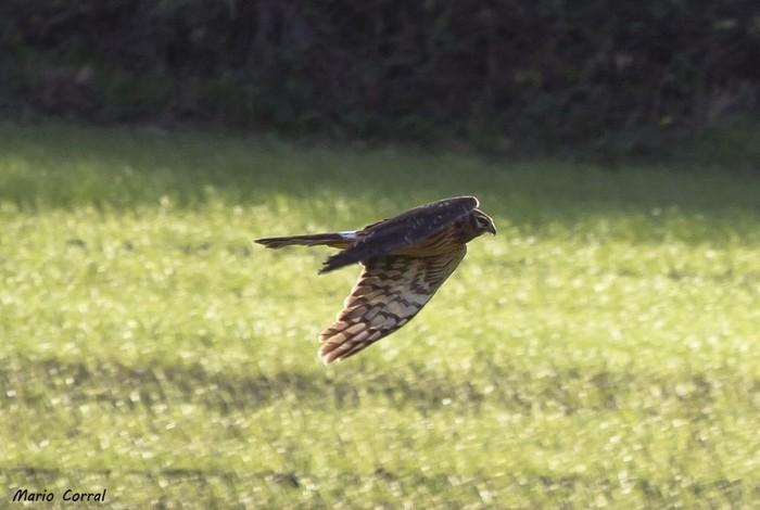 Hegaztien migrazio pasea hasi da
