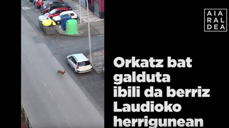Orkatz bat agertu da berriz Laudioko herrigunean
