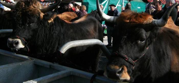 Orozkoko Udalak dei egin dau herri-basoetatik ganadua kenduteko