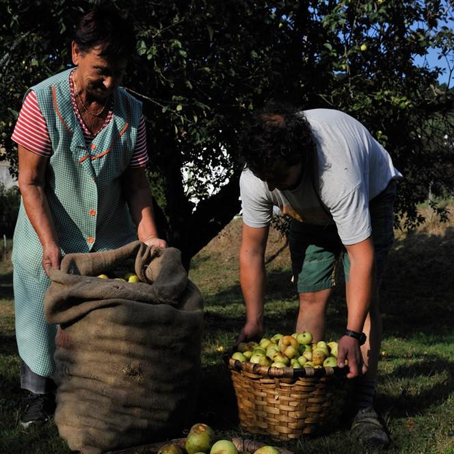 Proiektu agroekologikoa abiatzeko aholkularitza teknikoa jasotzeko aukera egongo da Aiaraldea Ekintzen Faktorian